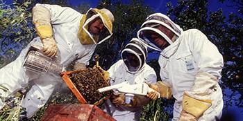 Killerbienen - Fakten und Hintergrundinformationen über dieses  Phänomen in Brasilien