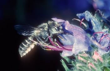 Bienen und Blüten – Wechselbeziehungen in neuem Licht