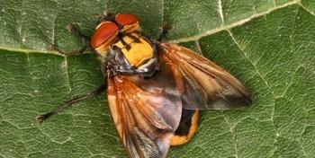 Insekt des Jahres 2014