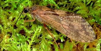 Insekt des Jahres 2013