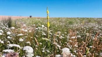 Blühflächen – Optimierung der Massnahmen für mehr Biodiversität in der Agrarlandschaft